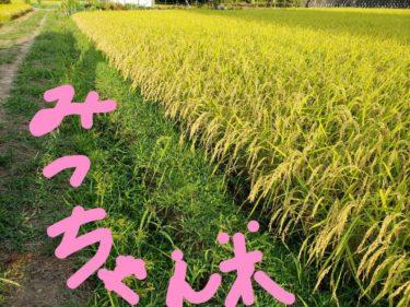 DAGAYAのお米は「みっちゃん米」